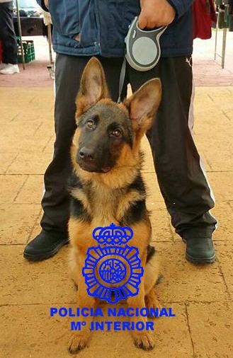 social perra semen en Burgos